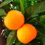 Come Preparare Sedano all'Arancia
